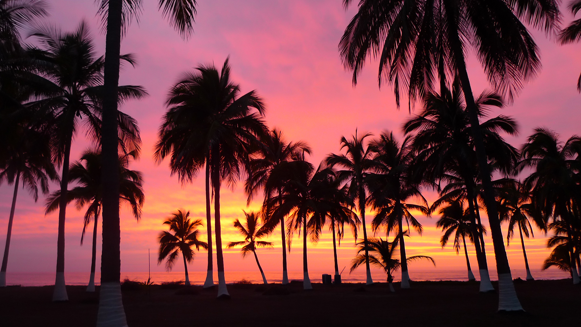 Palm Trees, sunset, Riviera Nayarit