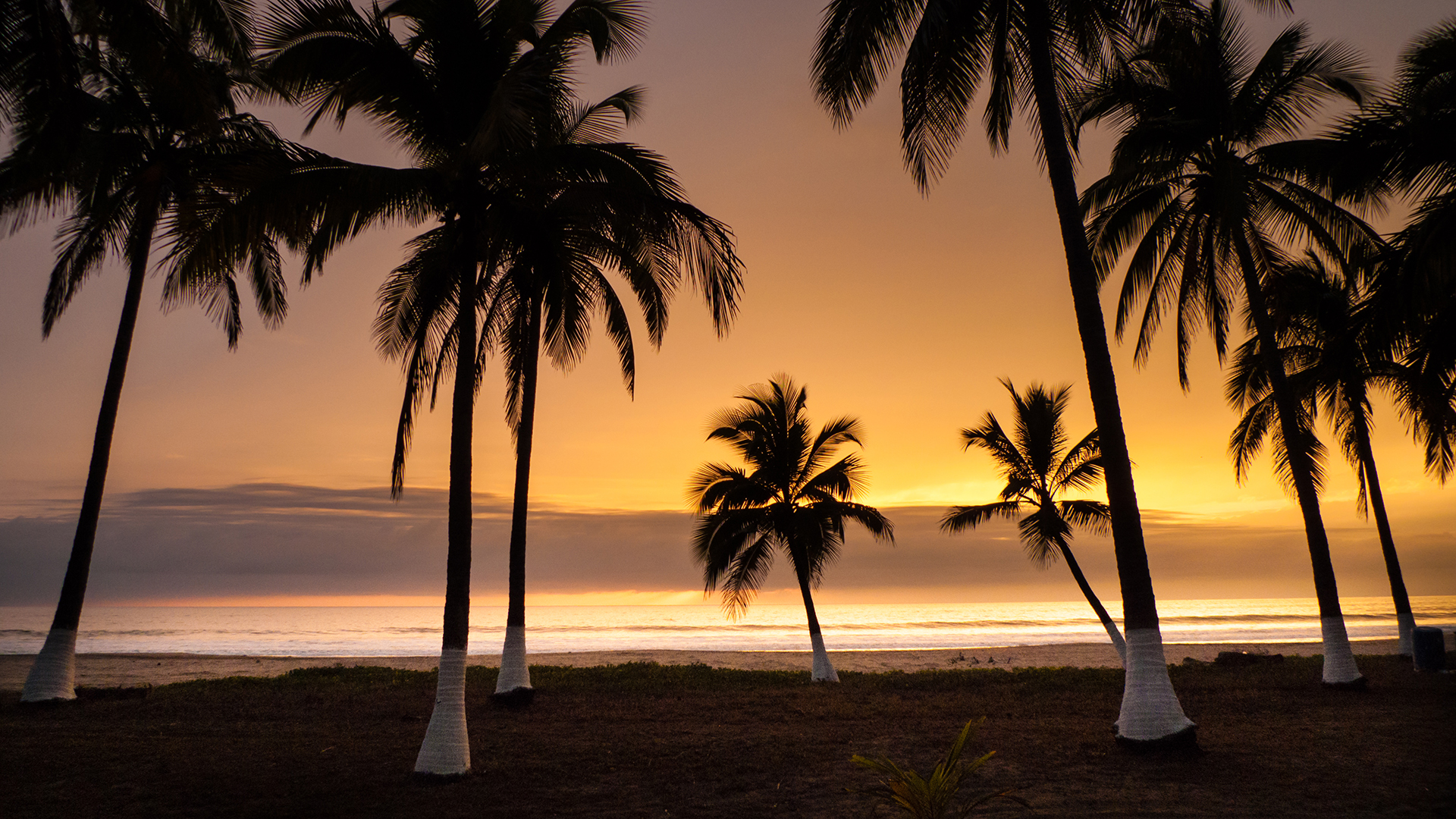 silhouetted palms at sunset in RIviera Nayarit